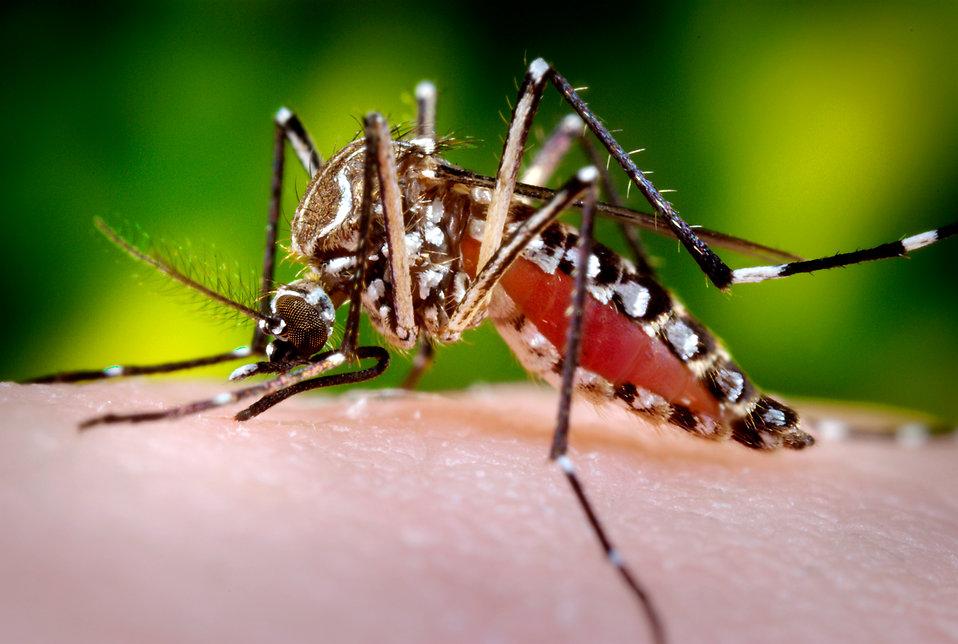 Virus zika - vse, kar morate vedeti o tem pošastnem virusu