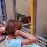 Otroci v zavetišču berejo plašnim psom – rezultati so odlični