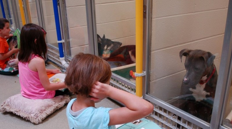 Otroci v zavetišču berejo plašnim psom - rezultati so odlični