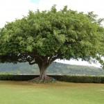 Poučna zgodba – radodarno drevo