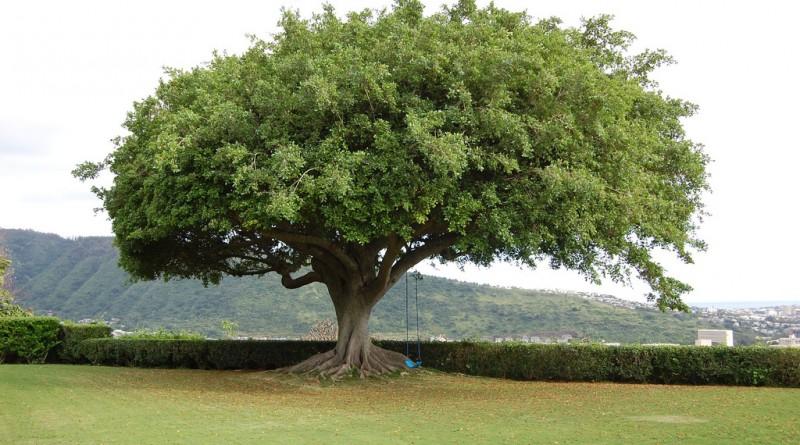 Poučna zgodba - radodarno drevo