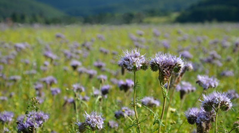 Seneni nahod - alergija na cvetni prah