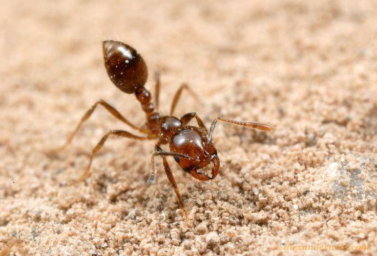 Piki in ugrizi žuželk - prepoznajte žuželke in njihove ugrize