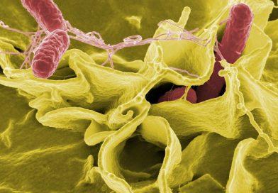 Salmonela – vzroki, simptomi in zdravljenje