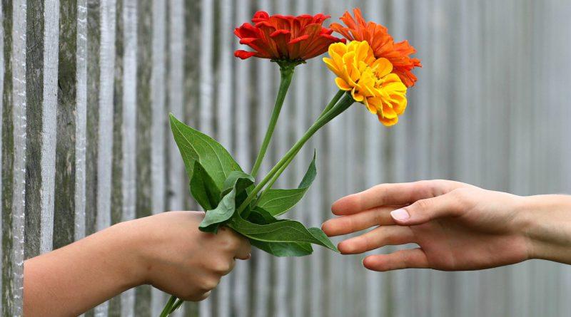 Ljubeča vedenja (1)