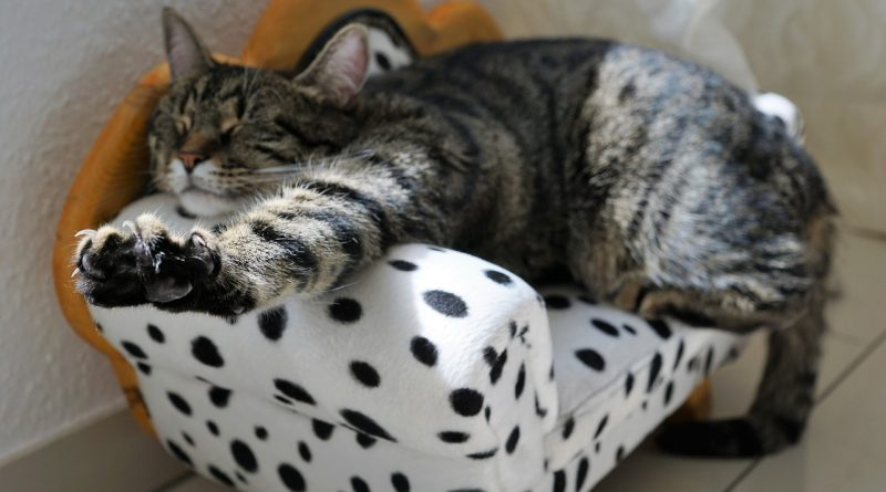Bolezen mačje opraskanine - bartoneloza
