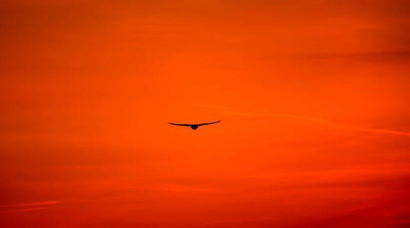 Temelji zavestne vzgoje - odpuščanje