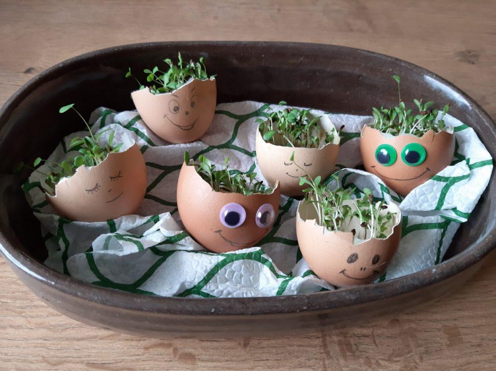 Dan zemlje - možiclji v jajčnih lupinah